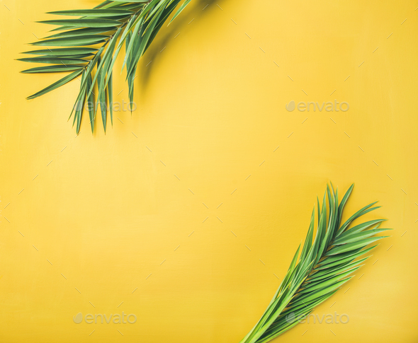 Green palm branches over yellow background - Stock Photo - Images