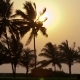 Beautiful Sunset Sun Setting Behind Palm Trees - VideoHive Item for Sale