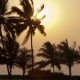 Beautiful Sunset Sun Setting Behind Palm Trees , - VideoHive Item for Sale