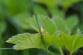 Grasshopper - hide and seek - PhotoDune Item for Sale