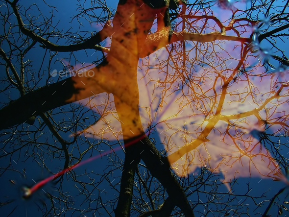 Autumn reflection - Stock Photo - Images