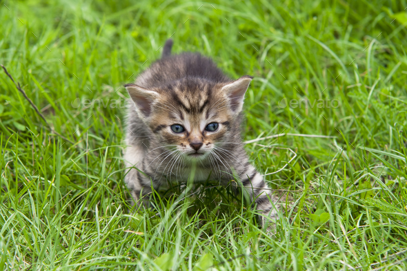 Tabby in the grass - Stock Photo - Images