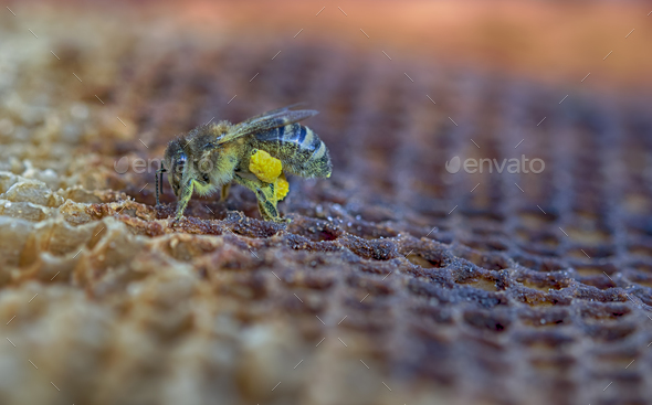 bee - Stock Photo - Images