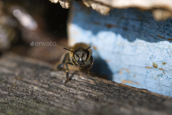 bee hive - Stock Photo - Images