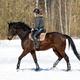 Horseback riding. A woman rides a horse. Training. Hippodrome. Sunny day - PhotoDune Item for Sale