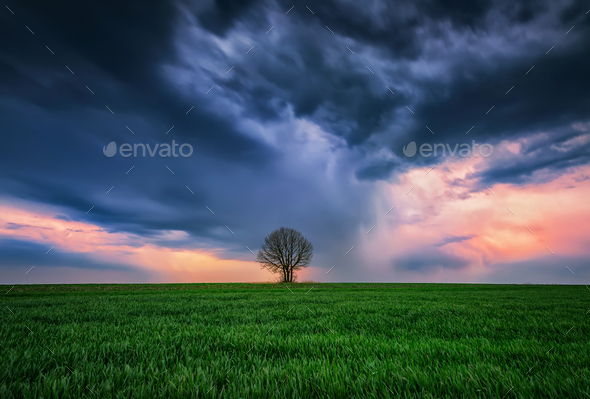 Alone in the storm - Stock Photo - Images