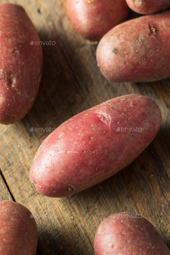 Raw Organic Red Fingerling Potatoes - Stock Photo - Images