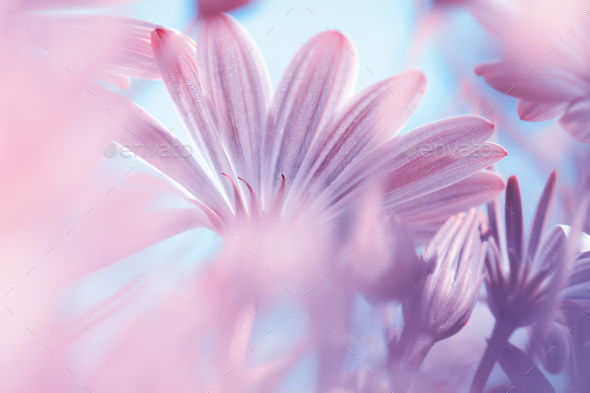 Dreamy floral background - Stock Photo - Images