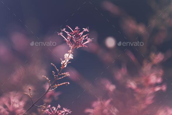 Floral vintage background - Stock Photo - Images
