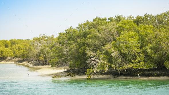 Abu Dhabi Mangroves - Stock Photo - Images