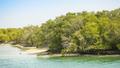 Abu Dhabi Mangroves - PhotoDune Item for Sale