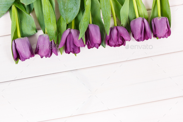 Bouquet of purple tulips for different occasions on white boards - Stock Photo - Images