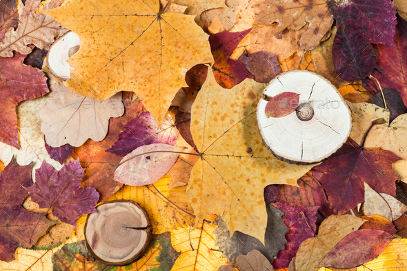 pied fallen autumn leaves and sawed woods - Stock Photo - Images