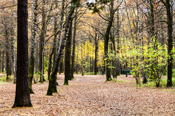 path with fallen leaves in urban park in autumn - Stock Photo - Images