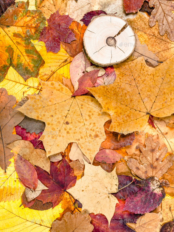 various fallen autumn leaves and sawed wood - Stock Photo - Images