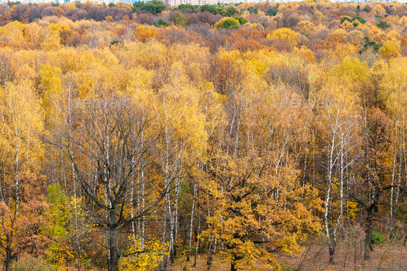 above view of forest glade in urban park in autumn - Stock Photo - Images