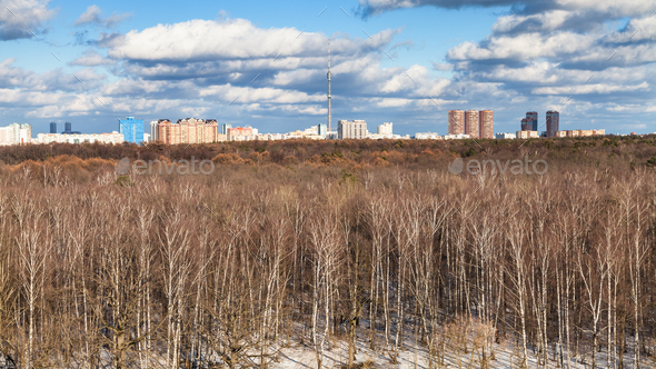 panoramic view of bare trees and last melting snow - Stock Photo - Images