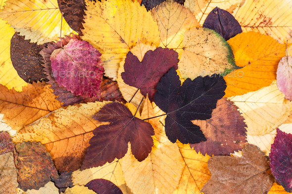 top view of natural autumn fallen leaves - Stock Photo - Images