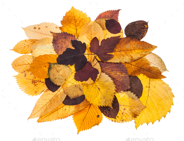 pile of various autumn fallen leaves isolated - Stock Photo - Images