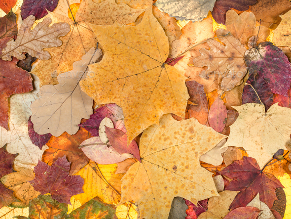 autumn background from various fallen leaves - Stock Photo - Images