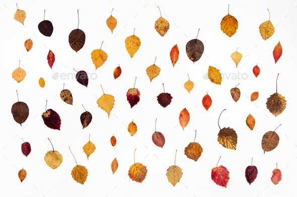 collage from various fallen autumn leaves on white - Stock Photo - Images
