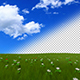 Grass And Flowers Field - VideoHive Item for Sale