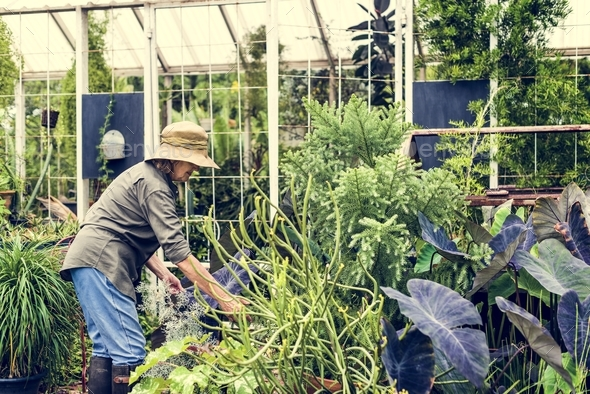Woman gardening - Stock Photo - Images