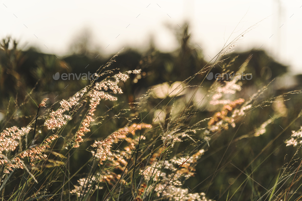 Wild grass growing in nature - Stock Photo - Images