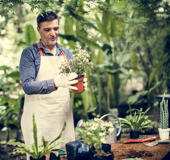A man is planting flowers - Stock Photo - Images