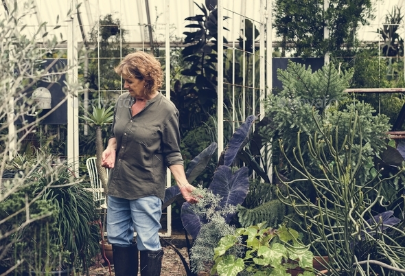 Woman working in a greenhouse - Stock Photo - Images