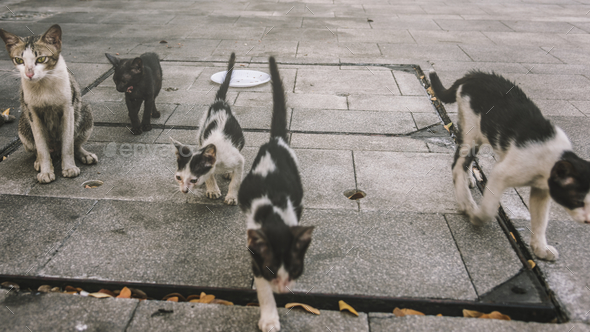 Group of cute street cats and kittens - Stock Photo - Images