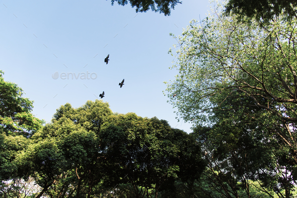 Birds flying in the blue sky - Stock Photo - Images