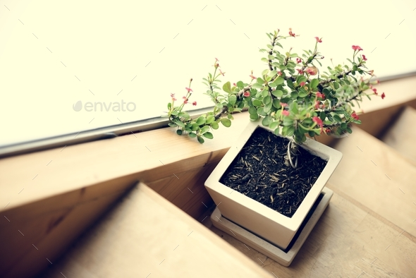 Houseplant and wooden stair - Stock Photo - Images