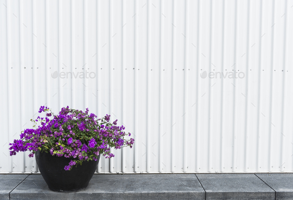 Bougainvillea pot on a side walk - Stock Photo - Images