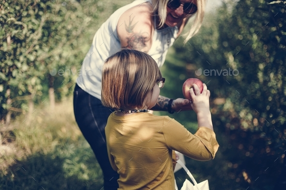 Mother and daugher picking some apples - Stock Photo - Images