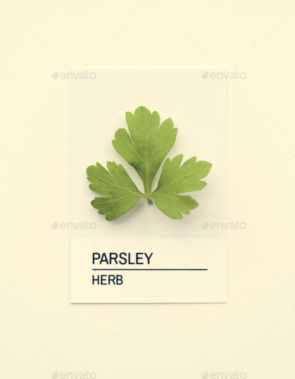 Parsley leaf on white paper - Stock Photo - Images