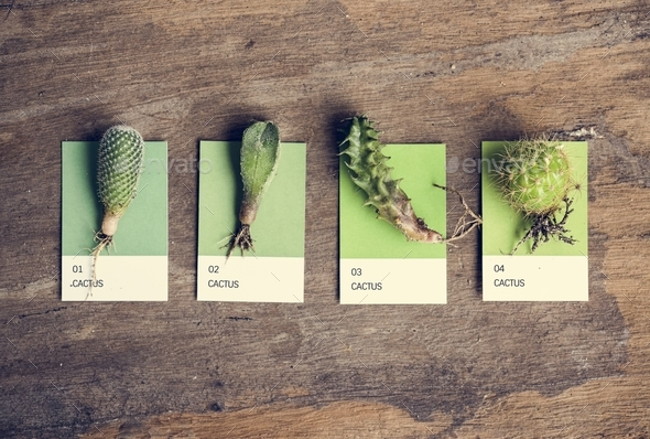 Different kinds of cactus - Stock Photo - Images