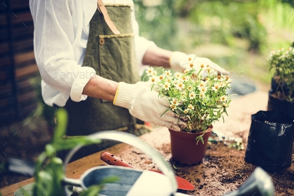 A woman is planting flowers - Stock Photo - Images