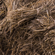 Dried hay or straw with grains - PhotoDune Item for Sale