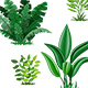 Set With Different Tropical Plants - GraphicRiver Item for Sale