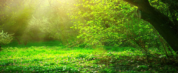 Photodune 21321563 spring park with green grass and trees beautiful nature landsca 590x242