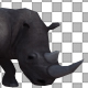 Rhino Attack Walk - VideoHive Item for Sale