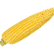 Husked cob of sweet corn, isolated, over white - PhotoDune Item for Sale