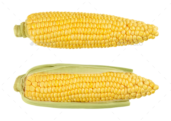 Two husked cobs of sweet corn, isolated, over white - Stock Photo - Images