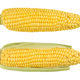 Two husked cobs of sweet corn, isolated, over white - PhotoDune Item for Sale