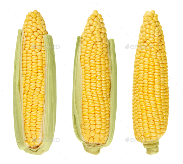 Three husked cobs of sweet corn, isolated, over white - Stock Photo - Images