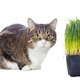 Beautiful gray cat and green grass - PhotoDune Item for Sale
