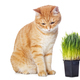 Beautiful red cat and green grass - PhotoDune Item for Sale