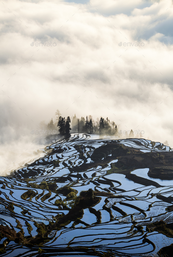 Yuanyang rice terrace at sunrise, Yunnan, China - Stock Photo - Images