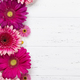 Gerbera flowers - PhotoDune Item for Sale